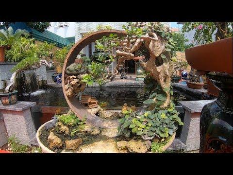 Bộ tiểu cảnh lạ mắt và những tác phẩm bonsai đẹp CLB AMT-BShp