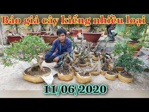 BG:  cây cảnh nhiều loại 11/6/2020  Zalo 0946 69 69 77  A ngoan, H. Lai vung, tỉnh Đồng tháp