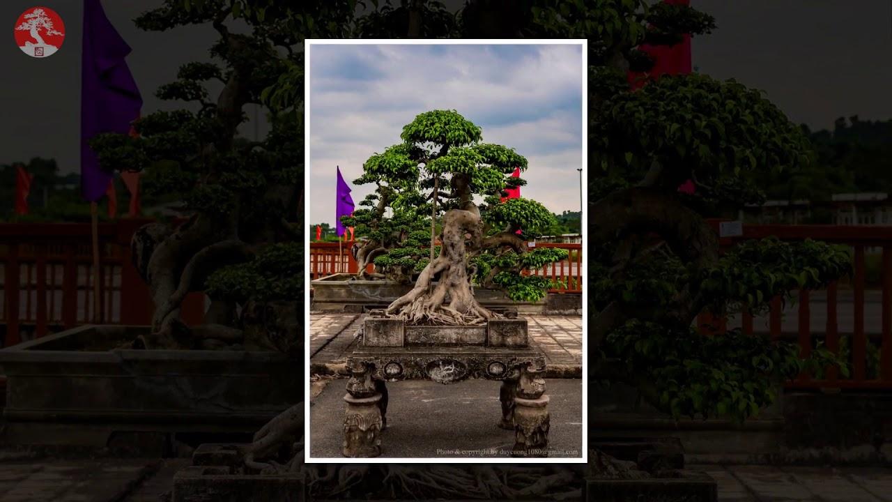 BONSAI VIETNAM   Part 175