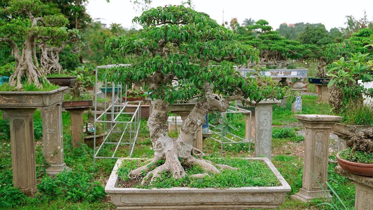 Bonsai mini đẹp giới thiệu cho các bác yêu cây