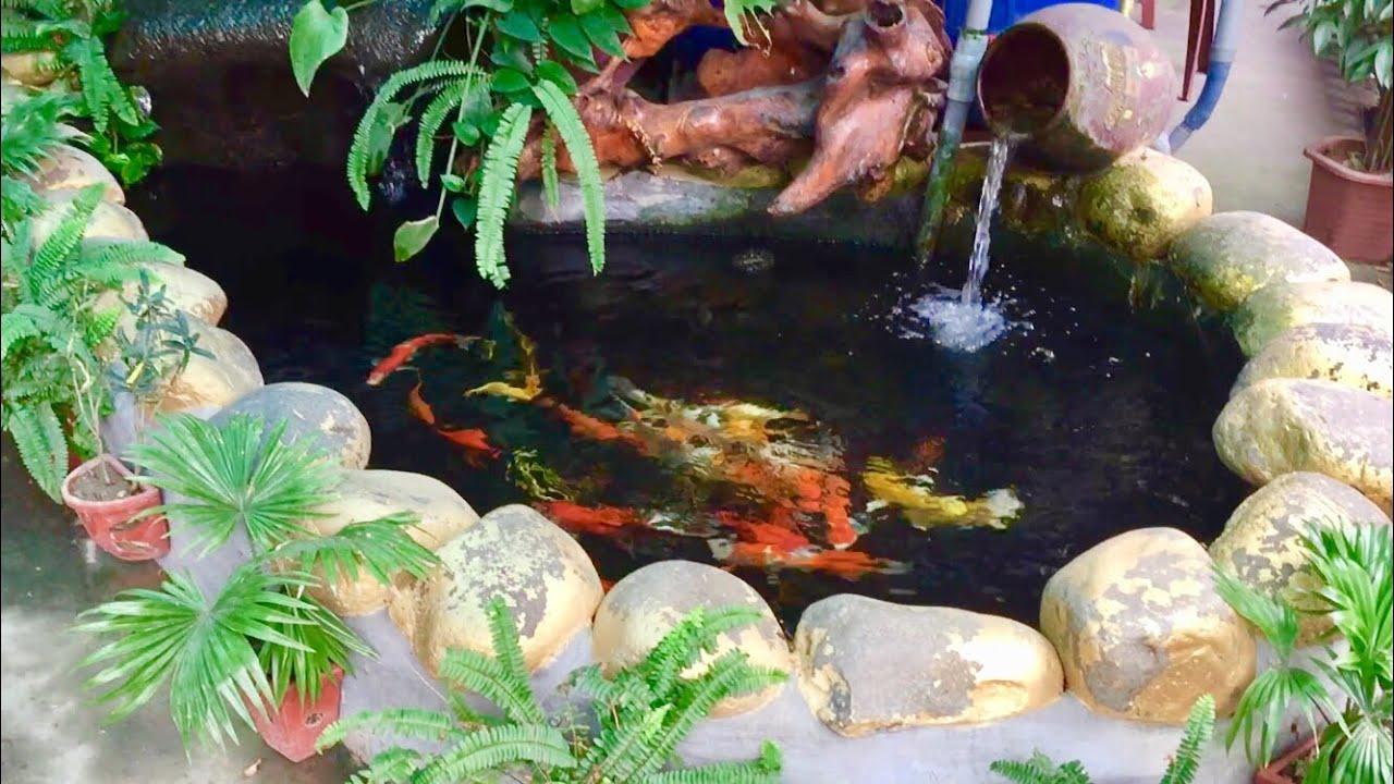 Cá Chép Koi, Tiểu Cảnh Sân Vườn. Nghe Chim Khướu Hót Quá Tuyệt.