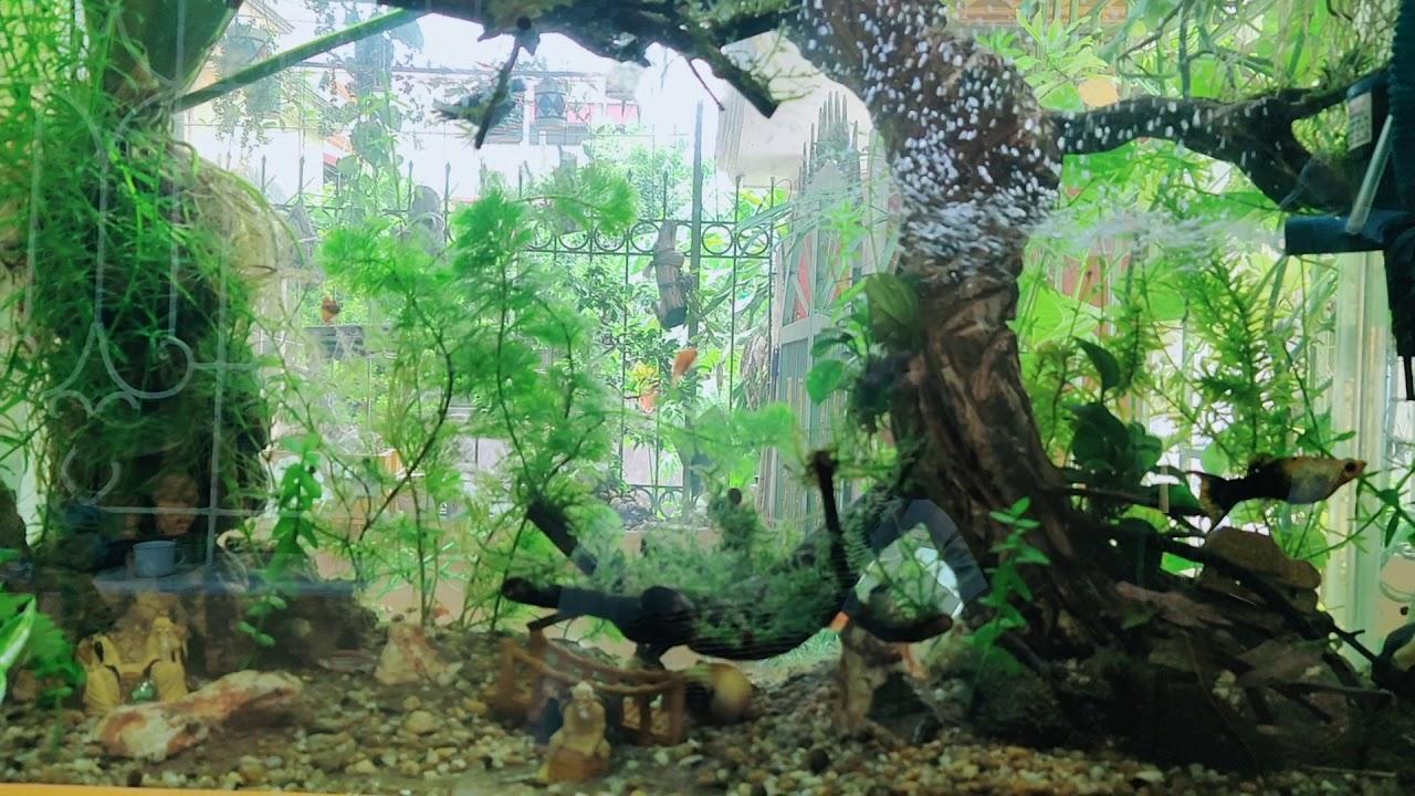 Cách thả và nuôi cá vào bể ko chết