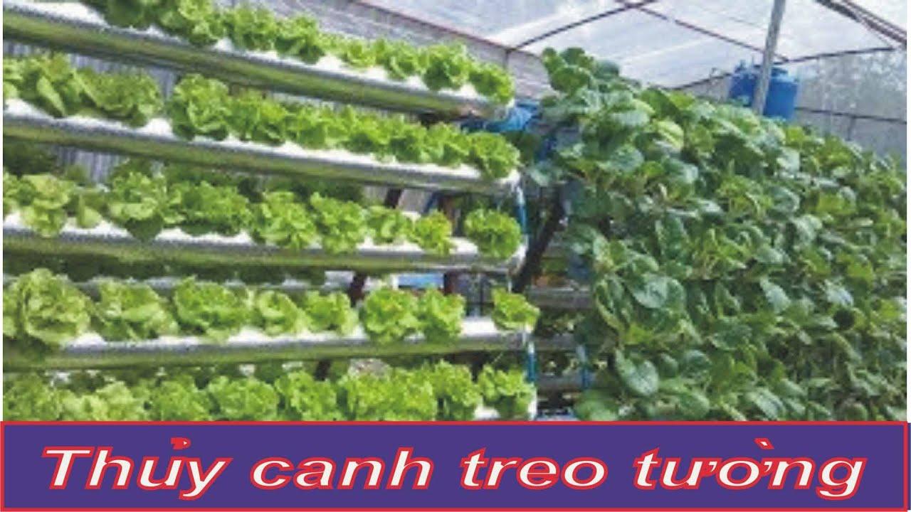 Cách trồng rau thủy canh treo tường (build a Vegetable Hydroponic).  Khue Atlanta