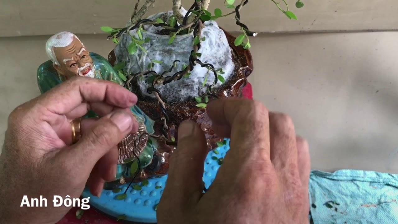 Cách uốn cây bonsai trên chậu ông tượng