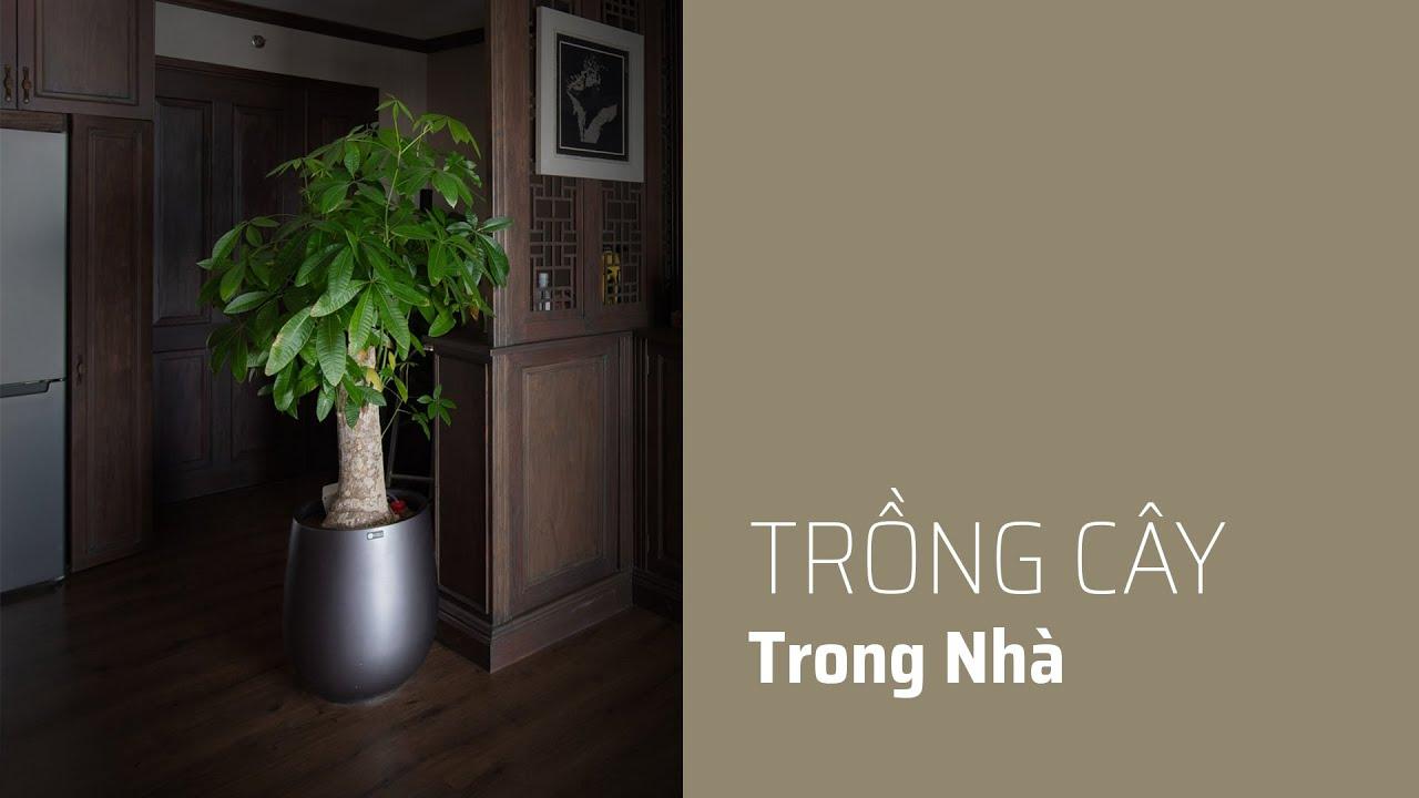 Cây trồng trong nhà: chậu composite, máy tưới tự động cây Kim Ngân