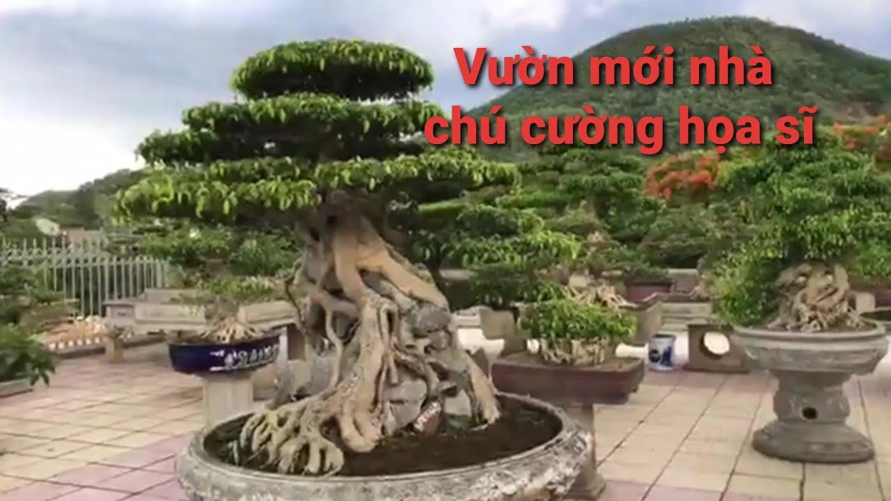 Chú Cường Họa sĩ chia sẻ Vườn cây cảnh mới trên dãy núi Ba Vì