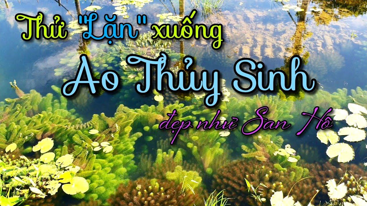"""Chơi lớn """"Lặn"""" xuống ao Thủy Sinh cực đẹp cực hot tại Sa Đéc"""