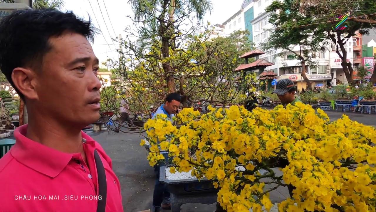 Chậu Hoa Mai kiểng 30 năm tuổi Đẹp Nhất bán giá 180 Triệu ở Chợ Hoa Tết cv 23/9 Sài Gòn | ZaiTri