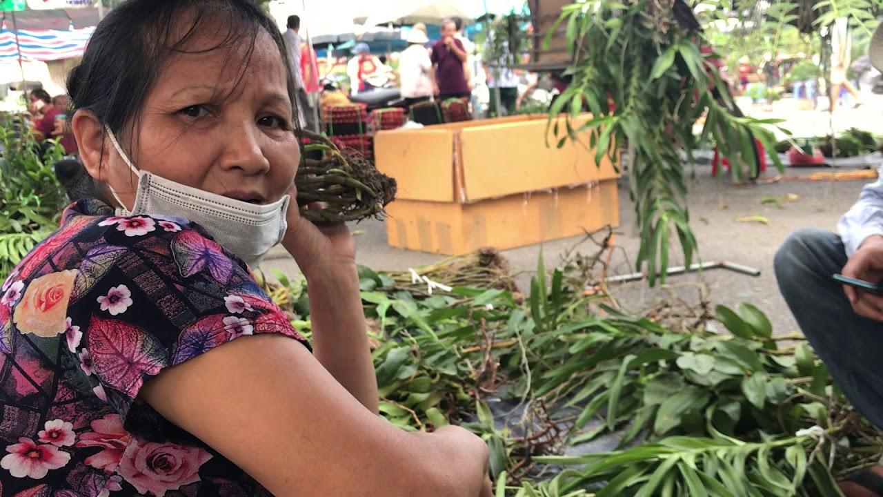 Chợ cây cảnh hoa lan cảnh thị xã Sơn Tây