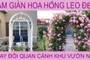 Cuộc Sống ở Mỹ . Cách Trồng HOA HỒNG LEO . Trồng Vườn Hoa Hồng . Quan Cảnh đẹp Cho Khu Vườn Nhà Bạn