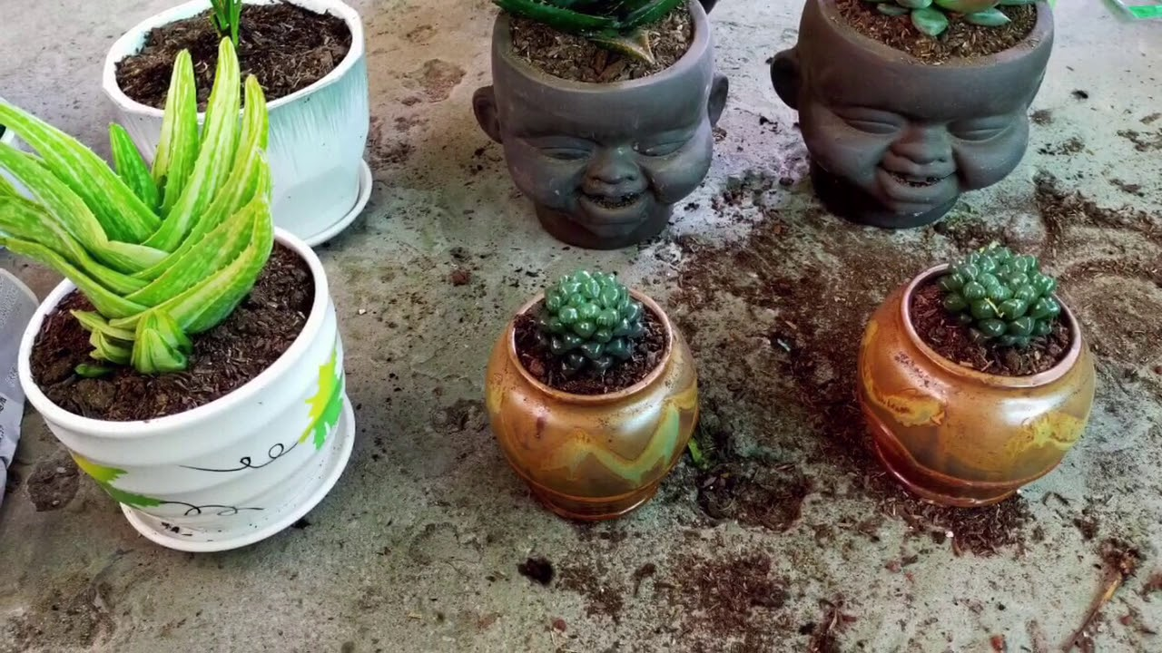 ??Em trồng cây cho khách #100 - Cửa hàng cây xinh