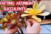 GRAFTING AEONIUM SUCCULENTS | Ghép sen đá Aeonium nhiều màu với nhau