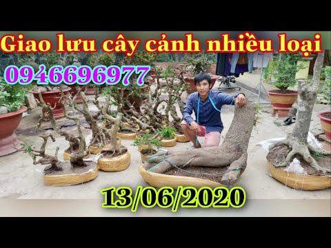 Giao lưu cây cảnh nhiều loại 13/6/2020 Zalo 0946 69 69 77 A ngoan,H .Lai vung,tỉnh Đồng Tháp