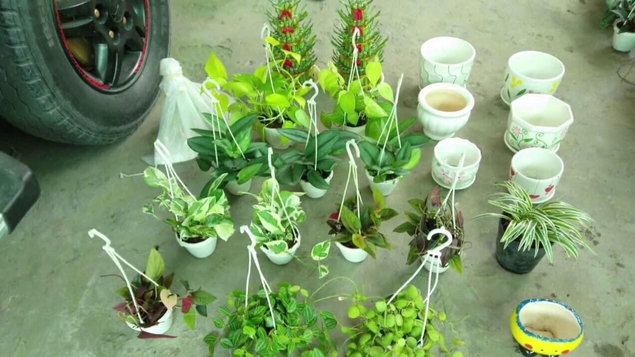 ??? Hàng của khách BÌNH MINH #102 - Cửa hàng cây xinh