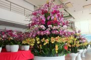 Hướng dẫn chăm sóc chậu hoa lan hồ điệp lâu tàn đẹp lung linh