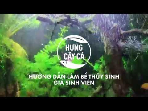 Hướng dẫn làm bể thủy sinh giá sinh viên #hungvlog #thuysinh