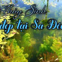 Hồ Thủy Sinh tự nhiên đẹp như San Hô là nơi sống ảo lý tưởng ở Sa Đéc