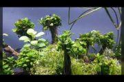 Hồ thủy sinh & layout cây cổ thụ sau 1 tháng cây thở như hấp hối , phát triển bùng nổ