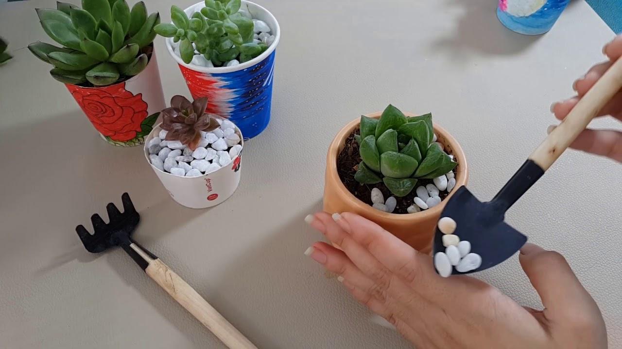 Hoàn thiện trồng một cây sen đá vào chậu để làm tiểu cảnh đơn giản