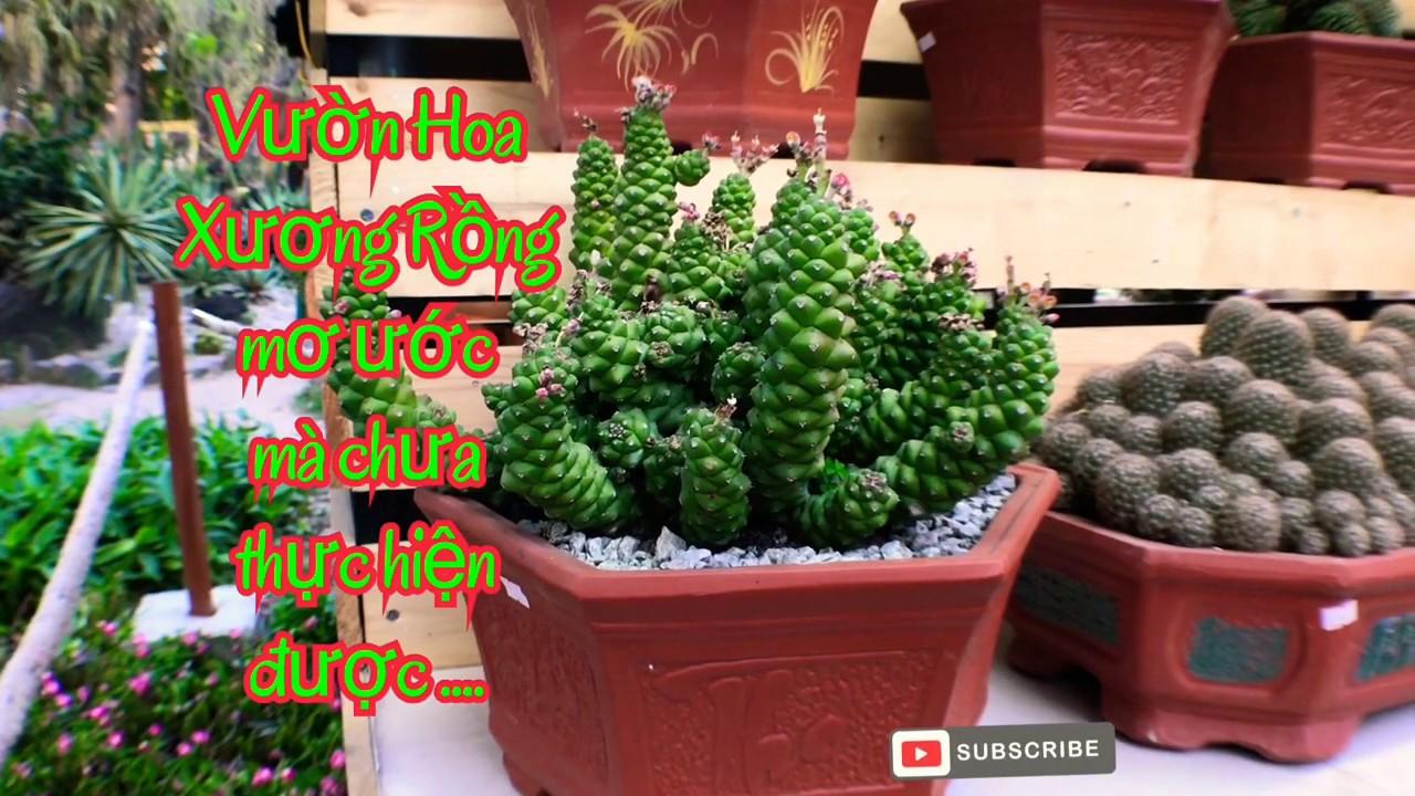 Hoa Xương Rồng - Rất thích trồng mà chưa có khu vườn nhỏ để trồng