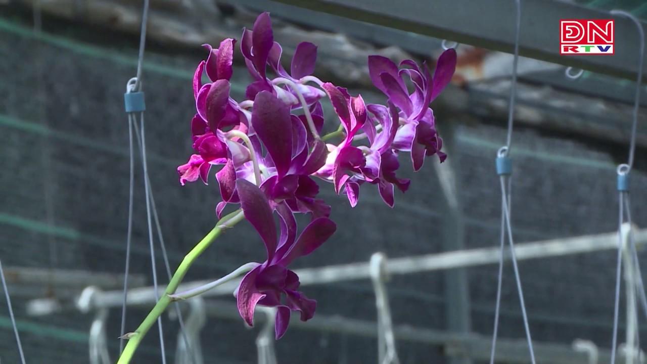 Hoa, cây cảnh : Mua dễ, khó giữ