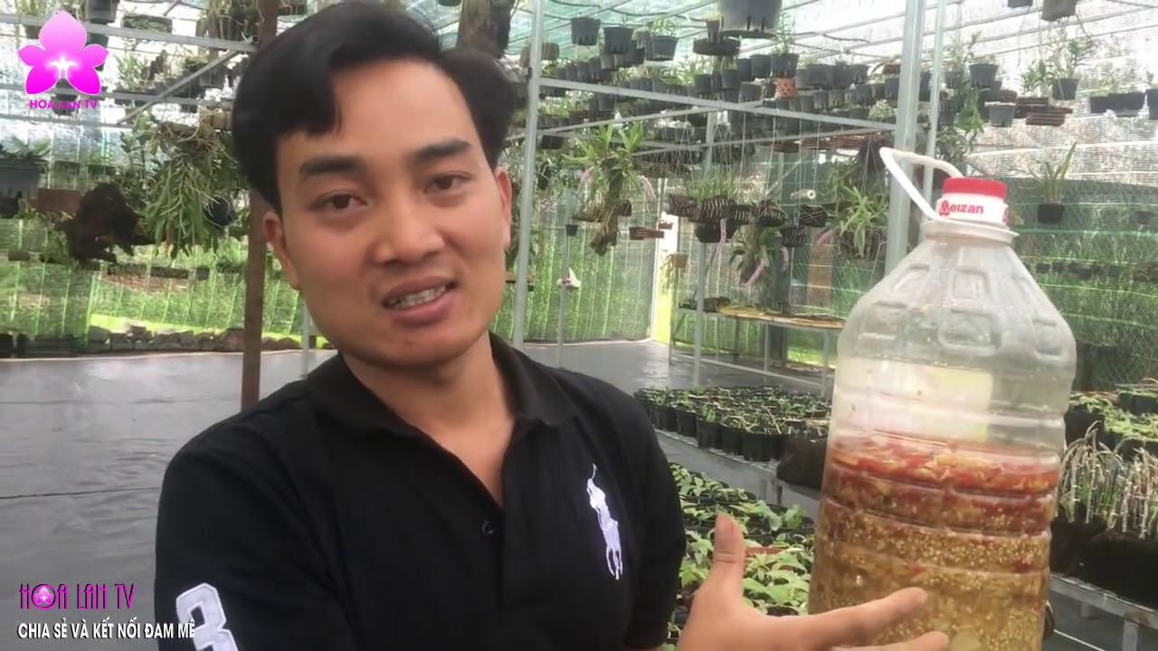 HoalanT2  Anh Nguyễn Ngọc Hà Chia Sẻ Toàn Bộ Về Phòng Và Trị Bệnh Cho Lan