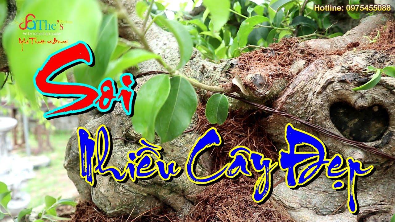 Khám Phá Vườn Cây Cảnh Của Nghệ Nhân Đàm Đá - Ba Thá | Dàn Phôi Cực Chất