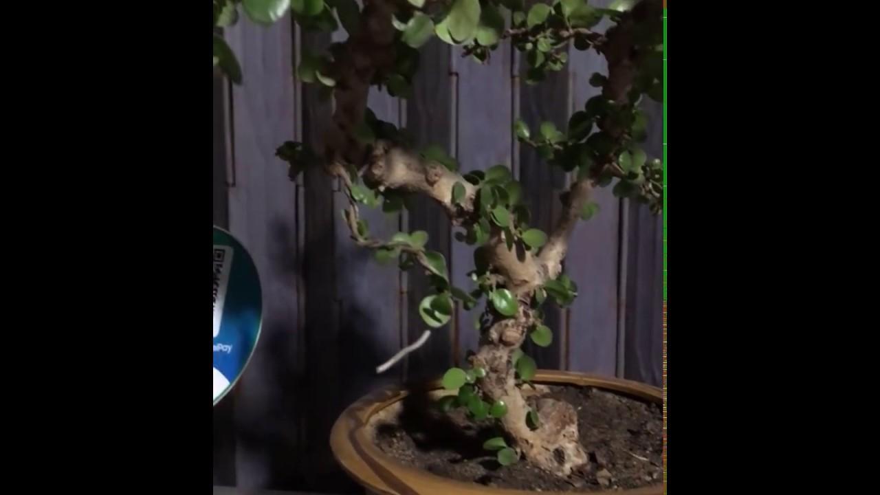 Khu vườn mini | Cây cảnh đẹp độc lạ #13 | Ánh Trân Slime