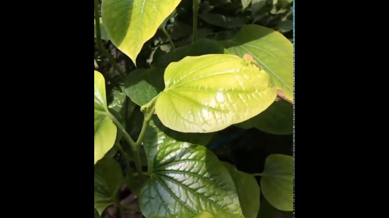Khu vườn mini | Cây cảnh đẹp độc lạ #17 | Ánh Trân Slime