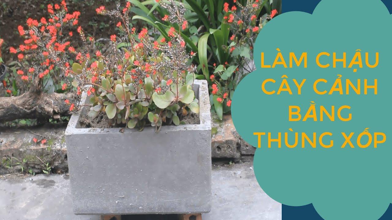 Làm chậu cây cảnh bằng thùng xốp/Make bonsai pots with a foam container