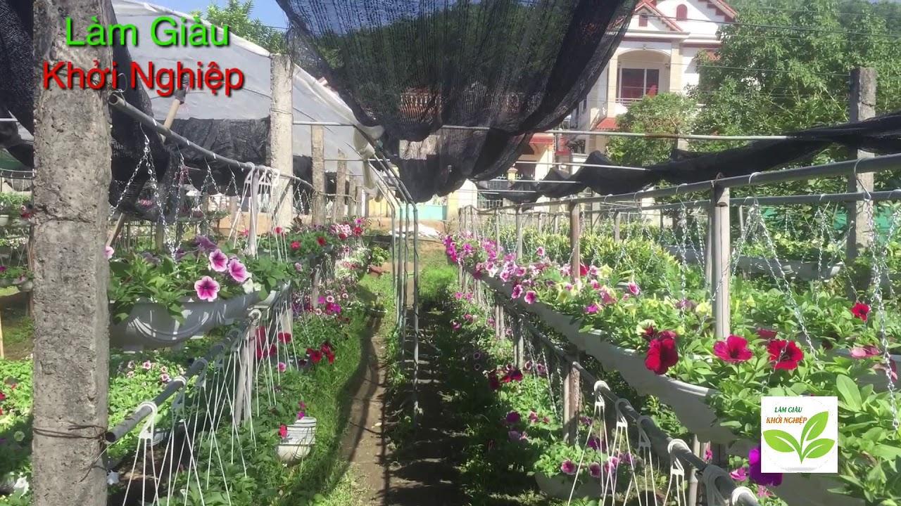 Làm giàu bằng nghề trồng hoa cây cảnh | làm giàu khởi nghiệp
