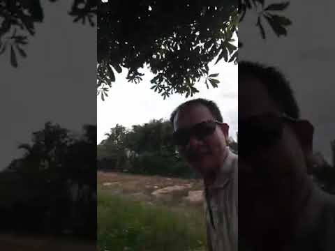 Lê đức hiền cây cảnh 28. Đào cây lộc vừng  bóng mat