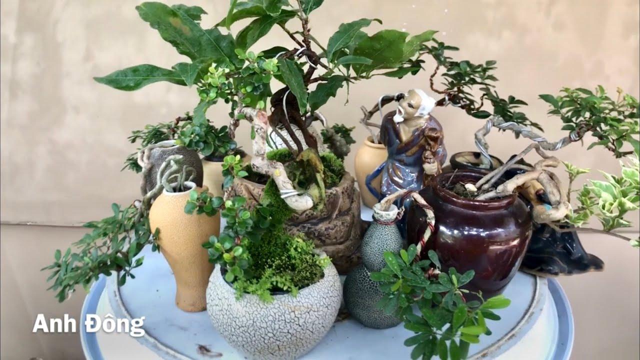 Loại cây nào chơi bonsai mini được