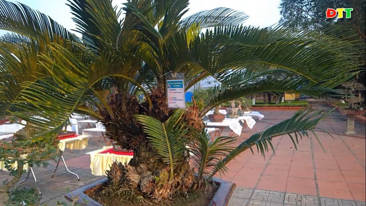 Loạt cây cảnh đẹp bonsai mini đỉnh cao tại triển lãm BN - Thuy garden