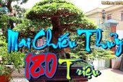 Mê Mẩn xem Vườn Cây Cảnh Của Anh Hùng Sơn, Đọc Giá Tác Phẩm Mai Chiếu Thủy 180 Triệu Tuyệt Đẹp