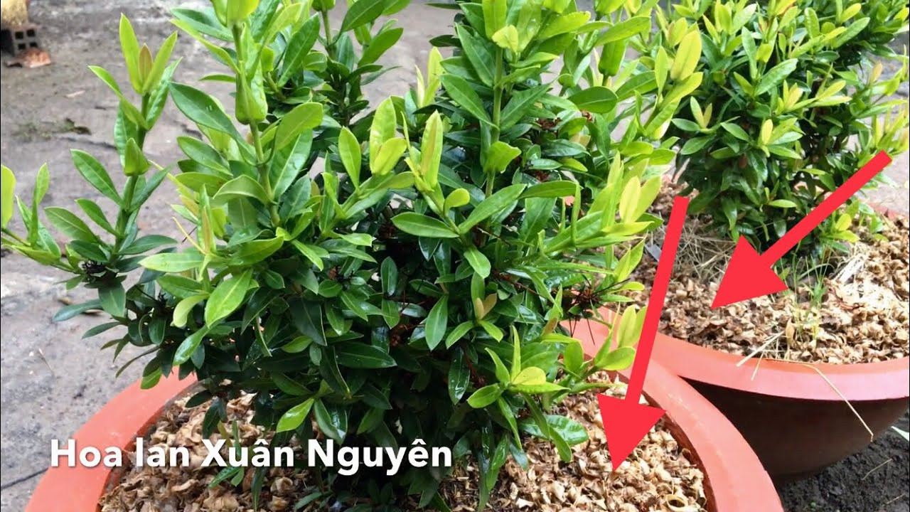 Mẹo khiến cây kiểng trong chậu luôn xanh tốt | easy tips for growing plants in containers