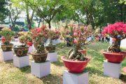 Ngắm tiểu cảnh bon sai đẹp tại Hội Hoa Xuân Công Viên Tao Đàn