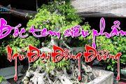 Ngỡ Ngàng Vì Những Tác Phẩm Rất Quý, Siêu Phẩm Ẩn Mình Tại Nhà Vườn Thinh Trọc - Hưng Hà