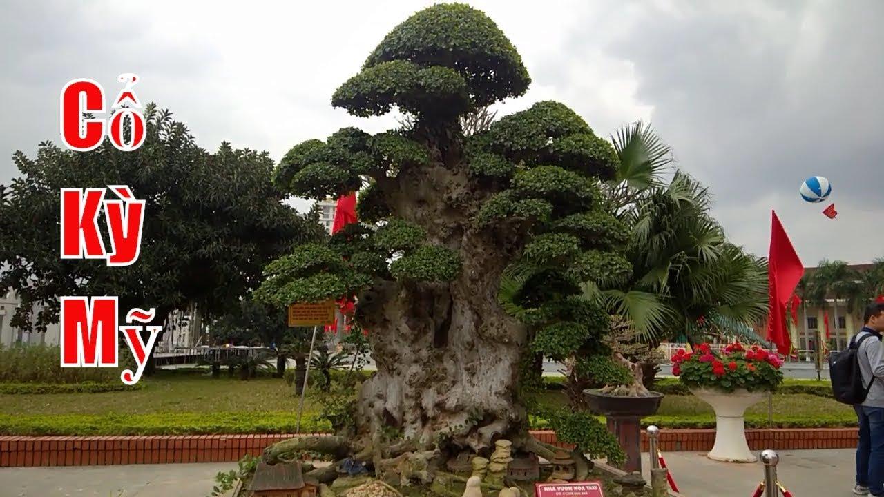 Nhiều cây cảnh cổ nhất Việt Nam, bonsai 1000 years old, dang tien thuy