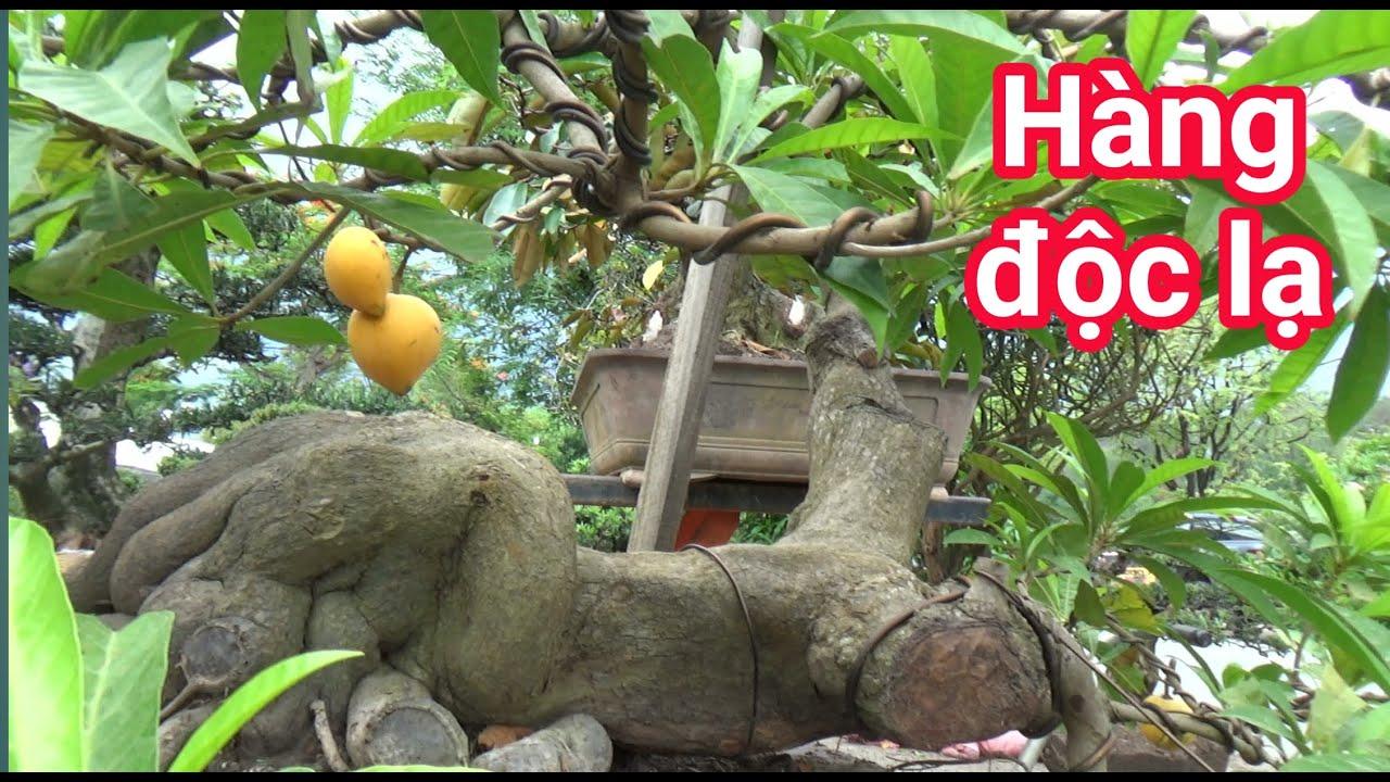 Phát hiện cây trứng gà dị dạng ở  triển lãm cây cảnh Biên Hòa, Đồng Nai
