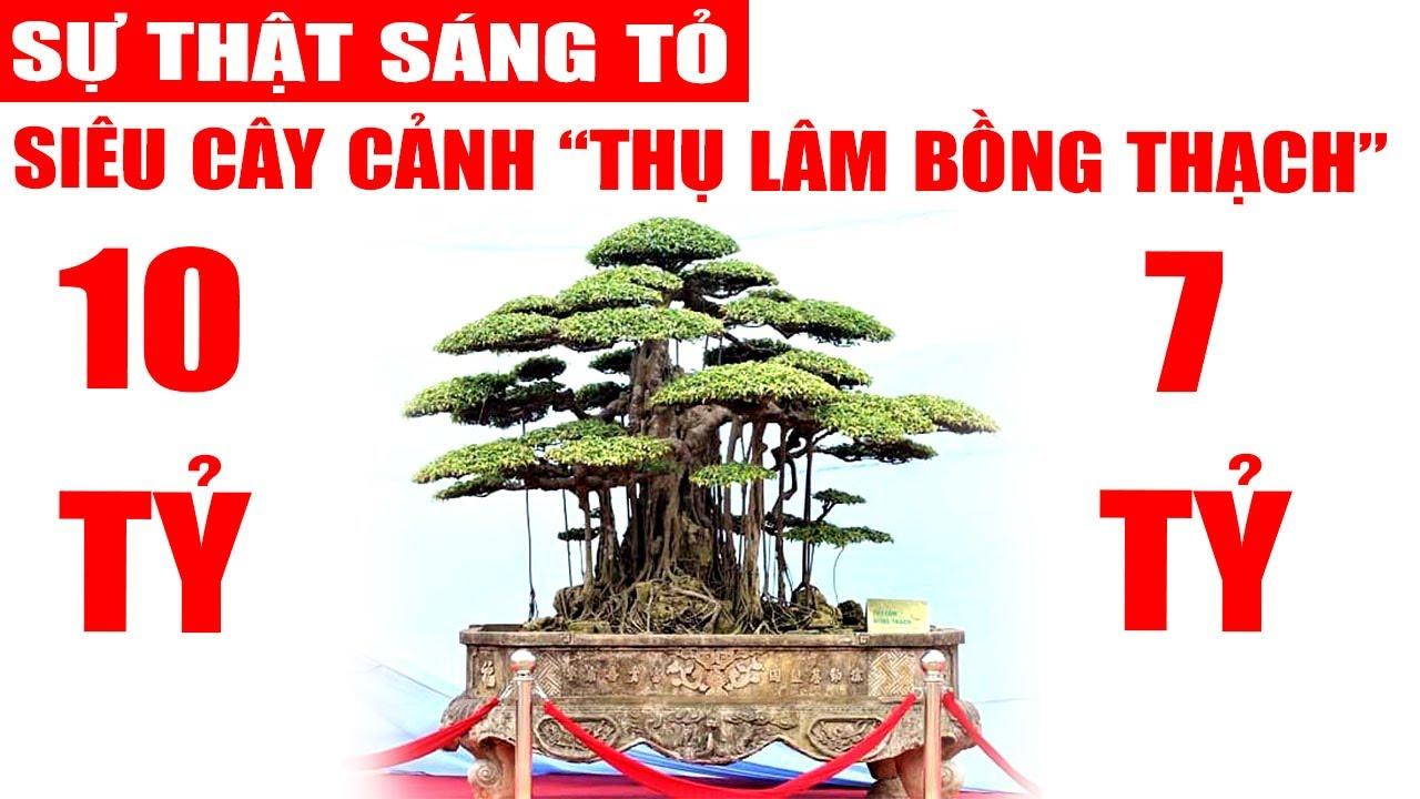 Sự thật siêu cây cảnh Thụ Lâm Bồng Thạch mua 10 tỷ hay 7 tỷ, nhớ xem hết video quý vị nhé