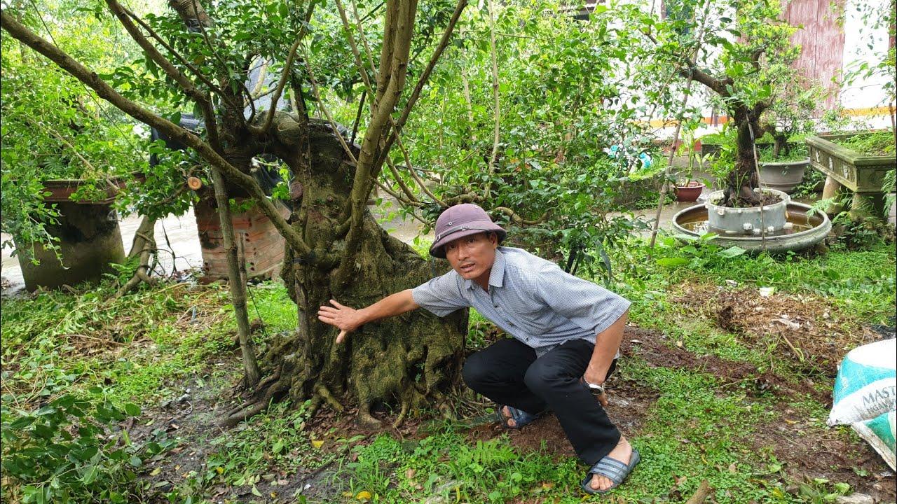 SH.2686.Giao lưu Những Phôi Sanh nghệ thuật vườn Nguyễn Giang.Nam Định. Đth 0396.00.66.55.