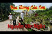 SH.3939. Giao lưu tại vườn Thông bonsai đặc biệt. Vua Thông Ngân Phương Côn Sơn.