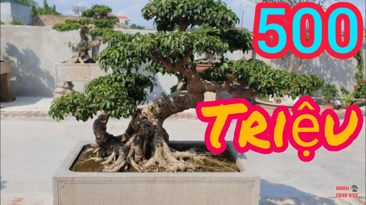Tác phẩm Lão Mai 500 triệu và hàng trăm tp quý vườn anh Mười Thường Tín.