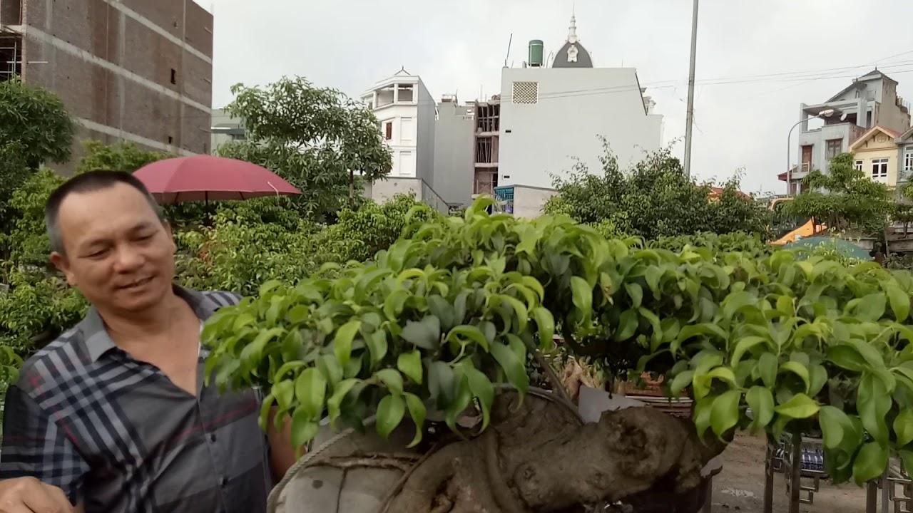 Thăm Cây mua  90 chậu 10tr Tại Ninh Hiệp
