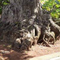 Thăm nhà vườn cây cảnh đẹp nhất khu vực miền trung tây nguyên của chú TÂM