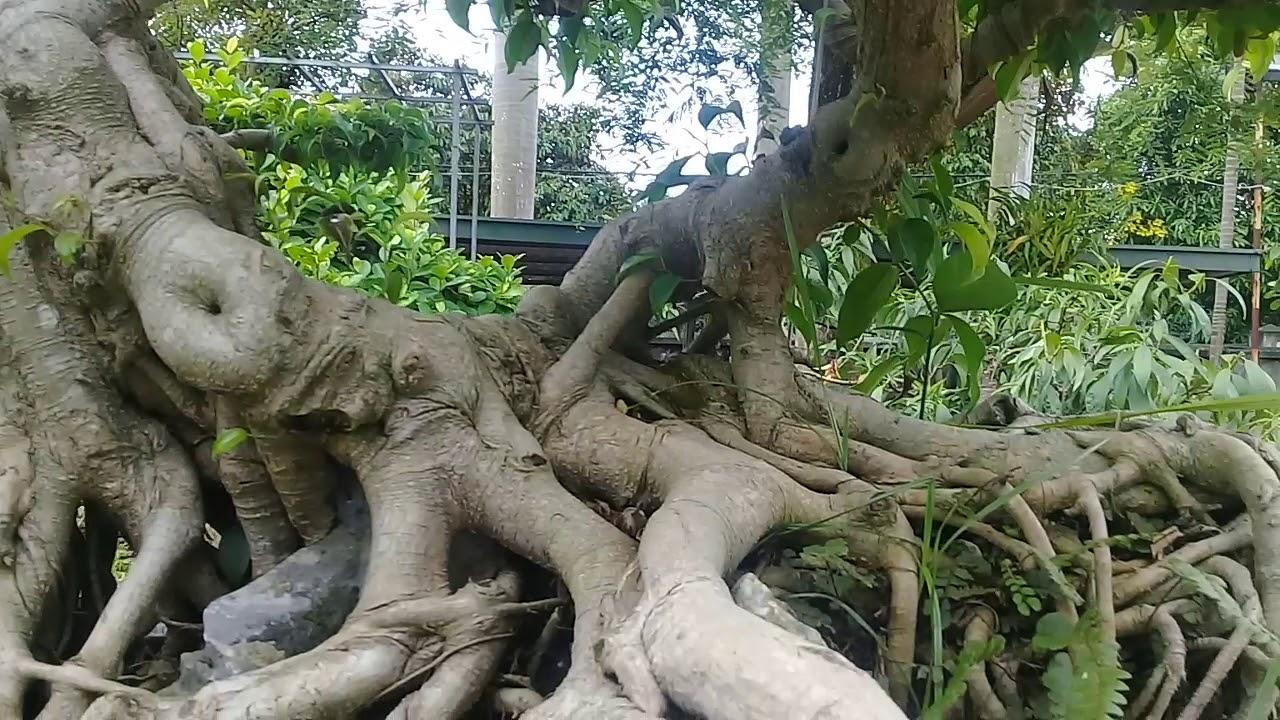 Thăm nhà vườn người yêu cây cảnh nghệ thuật .