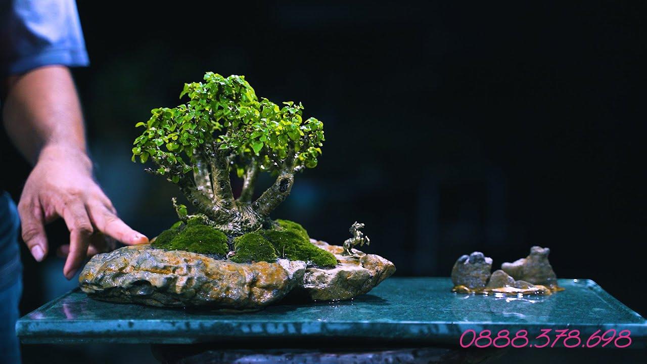 Thọ Bonsai - Số 123 ĐÃ BÁN - Tác phẩm Găng Tu Hú Thái