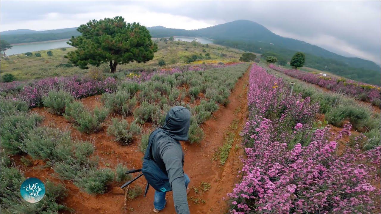 Tham Quan và Review Vườn Hoa Lavender ở Đà Lạt - Những Điều Kỳ Thú Khi Du Lịch