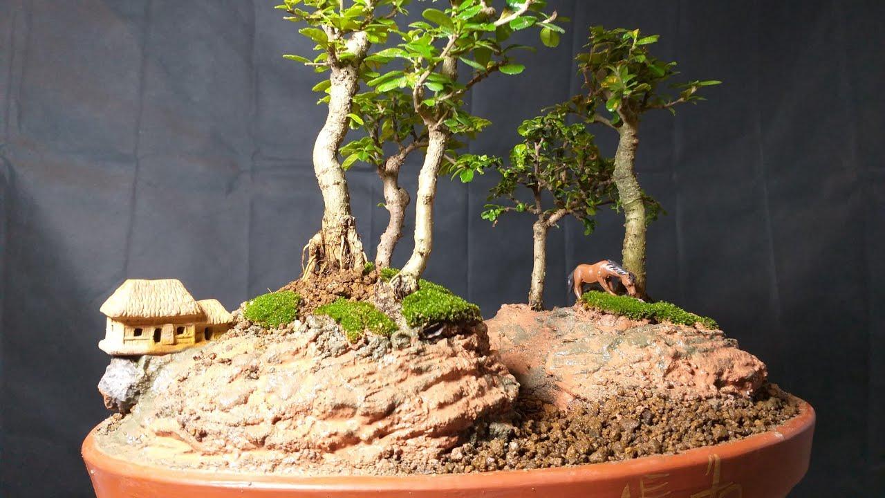 Tiểu cảnh cụm rừng trà phúc kiến(bùm sụm)